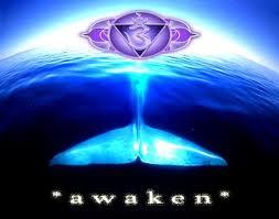 awakenn