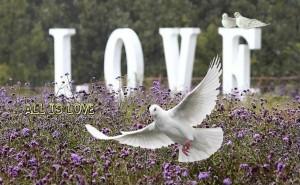 love dove